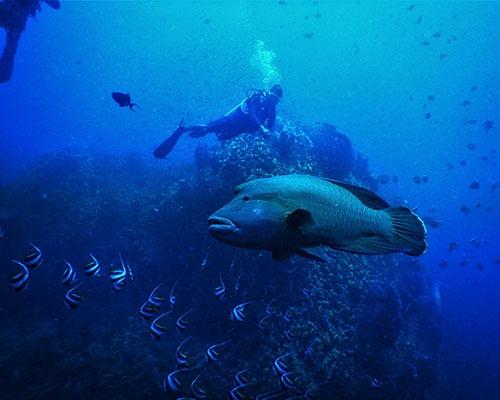 Scuba Diving for Certified Divers | PADI Scuba Dive Resort | Best Scuba Diving in Havelock
